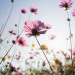 Nahaufnahme einer Blume auf einer Wiese